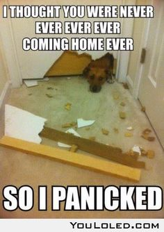 My dog actually did this. And ate carpet/carpet pad
