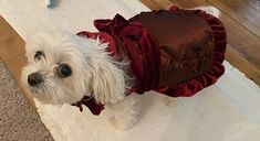 """I just loved unwrapping this dress and seeing the fancy little dress bag it came in! This dress is just gorgeous!!! It's made with beautiful material. So impressed with the quality!"" - J S. Dog Boutique, Christmas Dog, Little Dresses, Pet Products, Cute Dogs, Diva, Things To Come, Fancy, Pets"