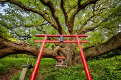 Intimate Photography, Buy Prints, Natural History, Conservation, Studios, Outdoor Structures, Japan, Nature, Naturaleza