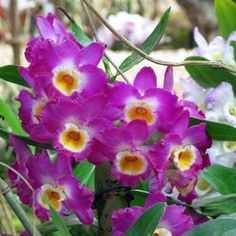 Orchids are a large family of over species that thrive in all climate zones except for the Arctic, the Antarctic and icy climate of high. Orchidaceae, Plant Care, Indoor Plants, Orchids, Nature, Humor, Humour, Lilies, Moon Moon