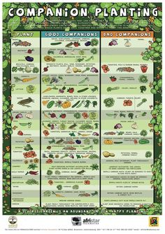 Well, my apocalypse friends... I found the resource... Now which one of you has a green thumb? Companion Planting Poster » Sustainable Living World