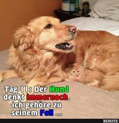 These funny dogs and cats are on a undertaking to make you smile.See more ideas about Funny animals, Dog cat and Cute animals.Read This Top 24 Funny Cats and Dogs Best Cat Memes, Cat And Dog Memes, Funny Animal Memes, Cute Funny Animals, Funny Animal Pictures, Funny Cute, Funny Dogs, Cute Cats, Dog Pictures