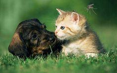 Insetos são nocivos para os pets