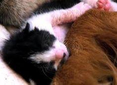 Interspecies Animal Friendships Will Warm Your Heart (VIDEO)