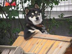 Community Post: 25 Animals Who Think They're People