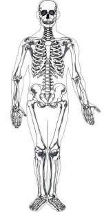 Human Body printables/Ideas--TONS!