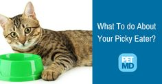 Has your cat lost any interest in his food? Here are some of the reasons why this could be happening.