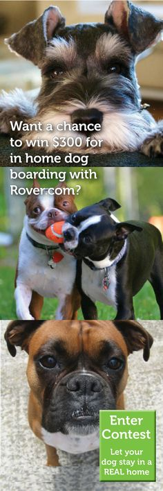 Want+a+chance+to+win+$300+for+in-home+dog+boarding+with+Rover.com?