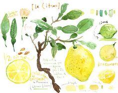 Lemon print Kitchen art Lemon tree watercolor by lucileskitchen