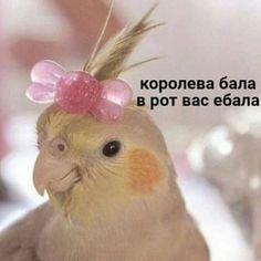 Hello Memes, Happy Memes, Russian Memes, Fun Live, Funny Mems, Cute Love Memes, Quality Memes, Instagram Story Ideas, Meme Faces