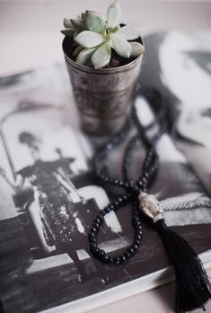 cactus ©Anna Malmberg http://northerndelight.elledecoration.se/