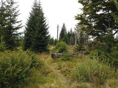 Einstieg in den dreckigen Filz auf dem alten Lusensteig Mountains, Nature, Travel, Rocks, Felt, Hiking, Voyage, Viajes, Traveling