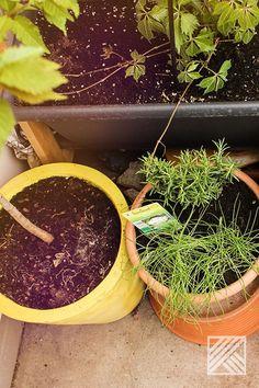 Wer das Bewässern noch von Hand machen muss, sollte sich diesen Ratgeber angucken. #Bewässerung #Garten #Balkon #Terrasse #Pflanzen #Gartenideen Planter Pots, Urban Gardening, Garden Hose, City Gardens, Urban Homesteading