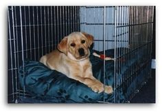 American Dog Trainers Network -- How To Successfully Crate Train Your Puppy