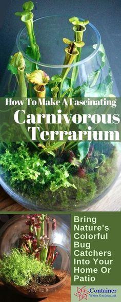 Decor Terrarium, Fairy Terrarium, Cactus Terrarium, Terrarium Containers, Terrarium Wedding, Plants For Terrariums, Glass Terrarium Ideas, Closed Terrarium Plants, Marimo Moss Ball Terrarium