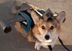 Corgi dressed as Serenity from Firefly