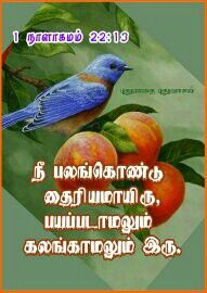 Tamil Bible Words, Names Of God, Word Of God, Bible Quotes, Bible Scripture Quotes, Biblical Quotes, Scripture Quotes, Bible Scriptures