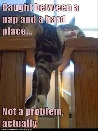 Caught between a nap and a hard place. - LOLcats is the best place to find and submit funny cat memes and other silly cat materials to share with the world. We find the funny cats that make you… I Love Cats, Crazy Cats, Cute Cats, Funny Animal Pictures, Funny Animals, Cute Animals, Funny Photos, Animal Funnies, Animal Quotes