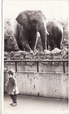 elephants  [#vintage]