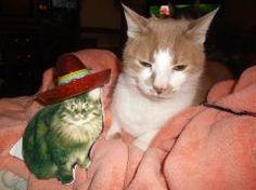 - Cat Scouts