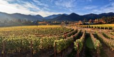 Wines Fly for Free begins today!  Alaska Airlines, Oregon Wine, and Travel Oregon have teamed up for this wonderful program!  Follow the link to begin planning your wine adventures!  Happy tasting! http://traveloregon.com/see-do/eat-drink/wineries-wine/