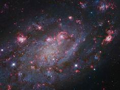 La magnífica isla universo NGC 2403 se encuentra dentro de los límites de la constelación Camelopardalis. De hecho, NGC 2409 se asemeja a otra galaxia con una abundancia de regiones de formación de estrellas que se encuentra en el centro de nuestro grupo de galaxia, M33 Triangulum Galaxy.