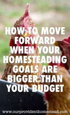 Do you have a homesteading budget? We discuss how to handle it when your homesteading goals are a lot bigger than your budget. #homesteading #homestead #savemoney