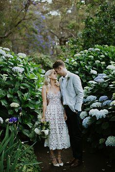 I want Giant hydrangeas in my garden like these.