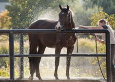 Credit: Thinkstock Take the time to design a wash area that fits the needs of your clientele and your budget, and you'll have a low-maintenance amenity that saves wear and tear on humans and horses.