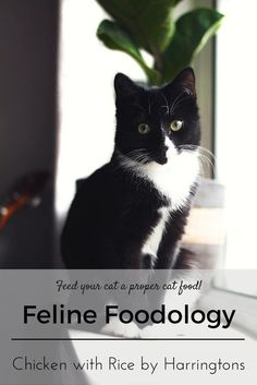 Feline Foodology: Chicken with rice by Harringtons  Cityscape Bliss // Naughty Felines