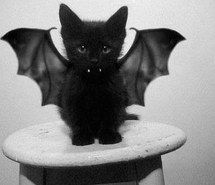 Inspiring picture adorable, stunning, amazing, dark, dragon, simple, vampire, beautiful, cute, teeth, grey, bad luck, kitty, black, cat, kitten, Halloween, wings, table, white. Resolution: 379x425. Find the picture to your taste!