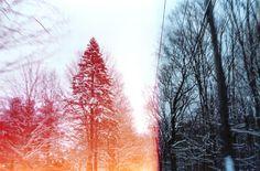 light leak, snow, canonet 28, trees - inspiring picture on Favim.com