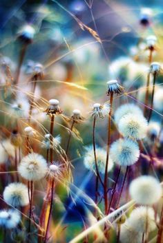 Dandelions....on a walk with my daughter as she tries to pick everyone that we pass, and twirls around and blows as she makes her wish.....watching that adds a fresh perspective to my day, into the carefree mind of a child!