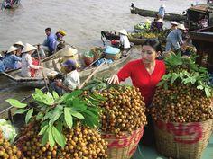 miền quê Nam Bộ với những cánh Đồng lúa bát ngát và những vườn cây ăn trái sum xuê. - Tìm với Google