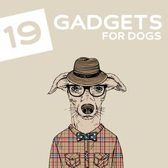 19 Coolest Gadgets and Gizmos for Dogs- your dog (and you) will love these! Dog Lover Gifts, Dog Gifts, Dog Lovers, Pet Food Store, Dog Gadgets, Coolest Gadgets, Diy Stuffed Animals, Animal Quotes, Dogs And Puppies