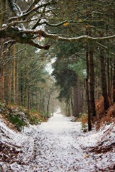 """""""Sound of silence"""" in the forest's fresh snowfall....."""