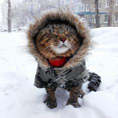 オシャレな猫の画像 31 ねこLatte+
