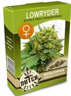 What Is The Genetic Origin of Autoflowering Cannabis Seed