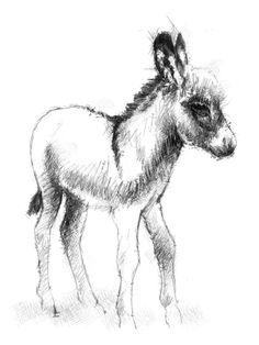 Artist Sean Briggs producing a sketch a day Little donkey #art #donkey #drawing #http://etsy.me/1rARc0J #sketch