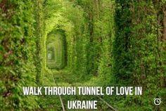 Walk through the tunnel of love