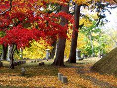 Mt. Albion Cemetery, Albion, New York.