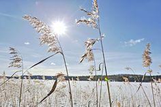 Terminen kevät kolkuttelee etelää ja länttä | Yle Uutiset | yle.fi