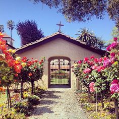 Instagram user, @Sami Tasaki, got an awesome shot of the rose gardens next to the mission.