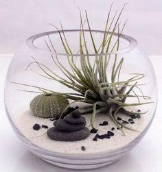 Inspiration n°5 : un mini terrarium