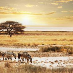 Afrika - krajina plná prekvapení, krásnej prírody, výnimočnej kultúry a exotickej safari Mountain Gorilla, Close Encounters, Insect Repellent, What To Pack, Walking In Nature, Tent Camping, Safari, Wildlife, Africa