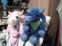 Gladdis the spotted cow and her new Bull friend.