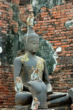 Thailand - LopBuri, the City of Monkeys. I made it there on my 2nd trip to Thailand--very funny!