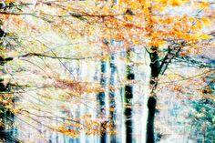 Like Painted Art 6 van Fine Art Photography - Paula van den Akker