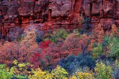 Zion Canyon.... doesn't look real!