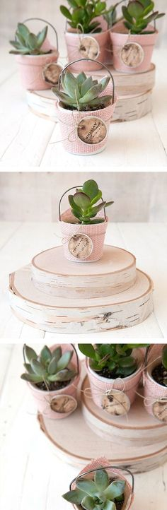 These miniature succulents are perfect party favors — guests can take them home and enjoy them for years to come! Click the pic for our simple DIY project.
